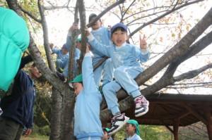 木登り (500x333)